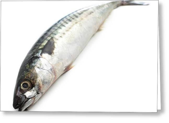 Mackerel Greeting Card by Science Photo Library