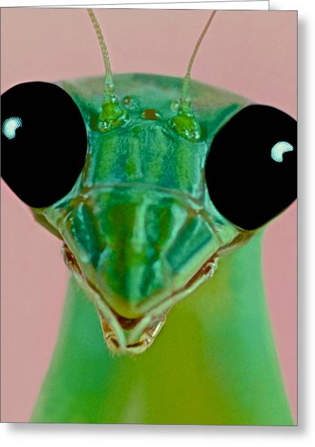 Macro Closeup Of The Female Chinese Mantis Greeting Card by Leslie Crotty