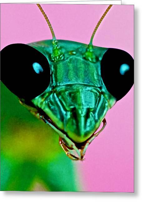 Macro Closeup Of The Praying Mantis Greeting Card by Leslie Crotty