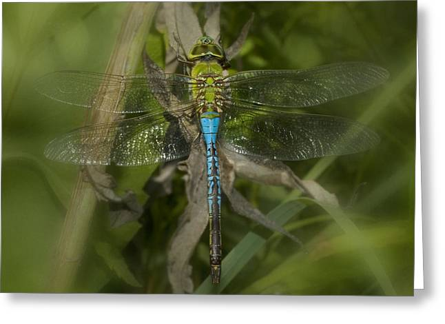 Macro Dragonfly Greeting Card by Jack Zulli