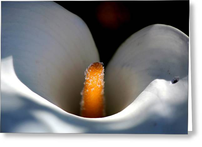 Macro Flower Greeting Card by Chris Whittle