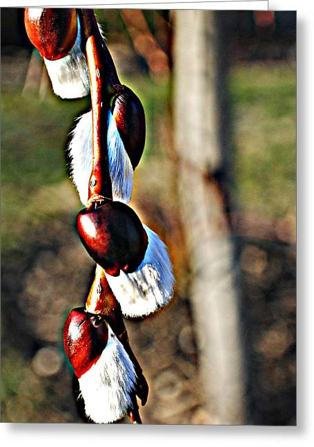 Macro Hdr Greeting Card by Frozen in Time Fine Art Photography