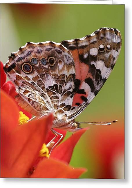 Macro Monarch Greeting Card