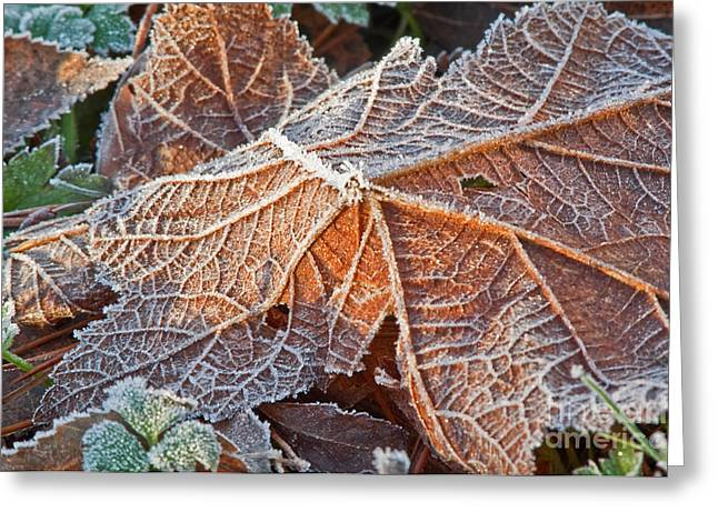 Macro Nature Image Of Fallen Leaf With Frost Greeting Card by Valerie Garner