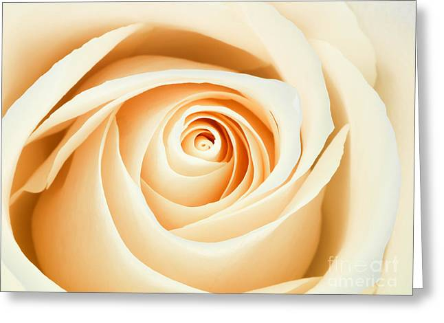 Macro Of A Peach And Pink Rose Greeting Card