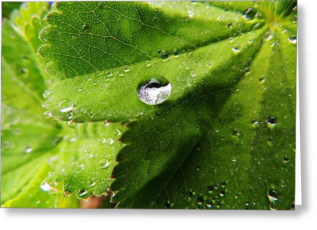 Macro Raindrop On Leaf Greeting Card by Karen Horn