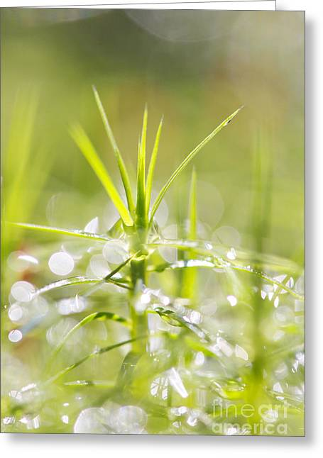 Macro Shot Of The Moss Greeting Card by Odon Czintos
