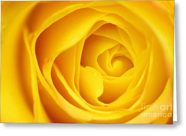 Macro Yellow Rose Greeting Card by Patrick Dinneen