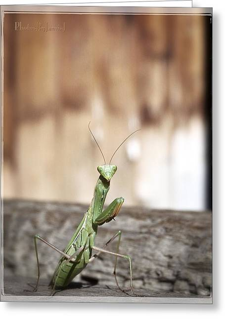 Madame Mantis Greeting Card