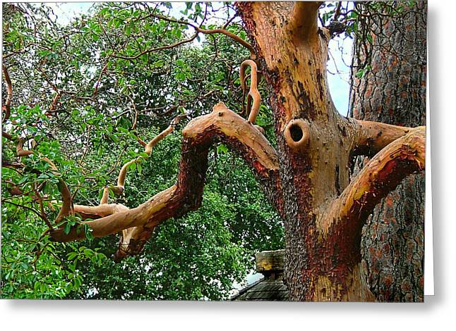 Greeting Card featuring the photograph Madrone Character by Wendy McKennon