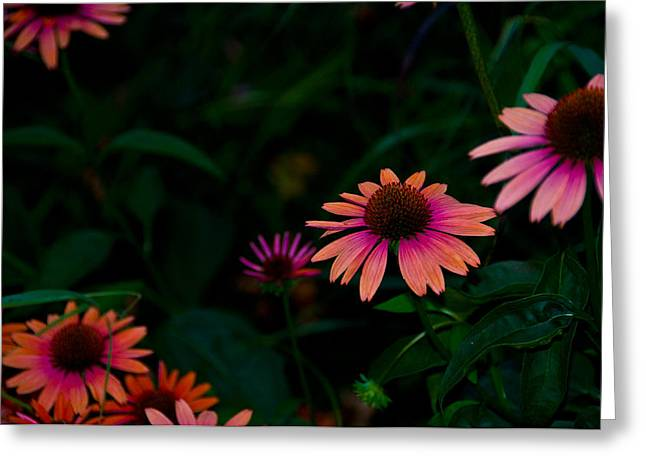 Magenta And Orange Greeting Card