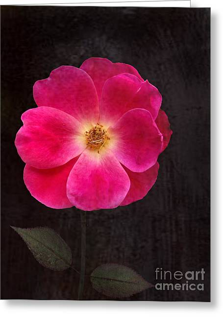 Magenta Mood Greeting Card by Kathi Mirto