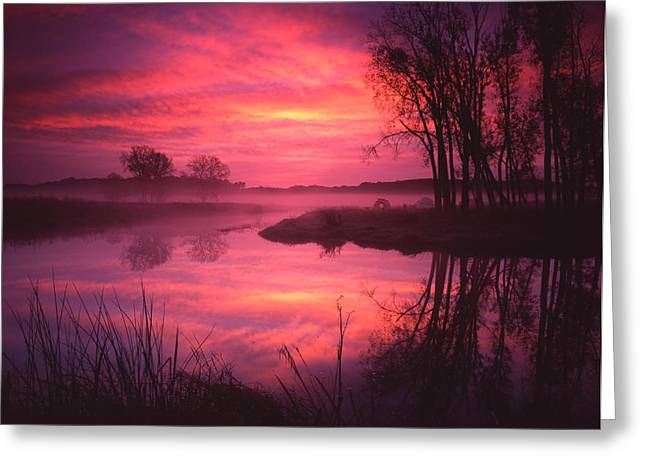 Magenta Morning Greeting Card by Ray Mathis
