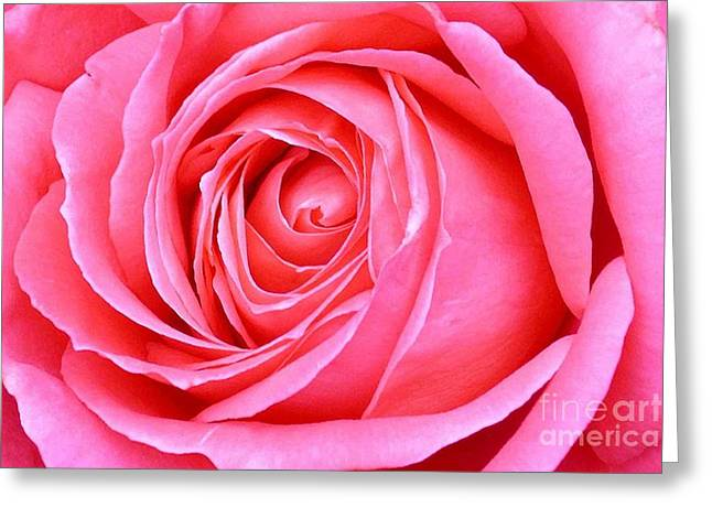 Magenta Rose Greeting Card