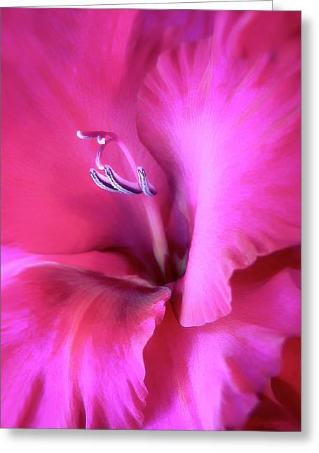 Magenta Splendor Gladiola Flower Greeting Card
