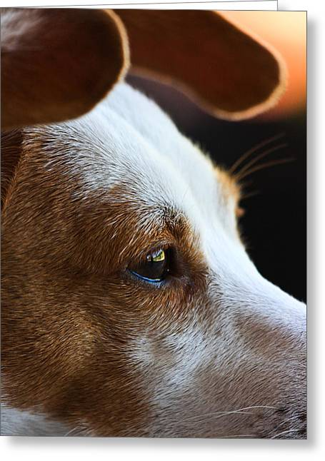 Maggie May Greeting Card by Mark Alder