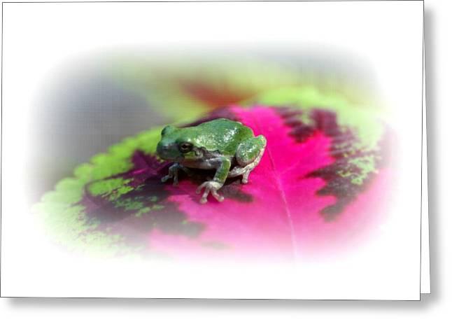 Magic Carpet Coleus Leaf Greeting Card