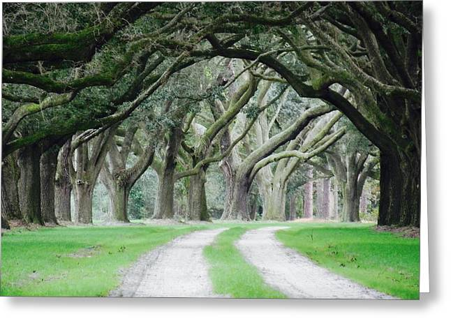 Magic Live Oaks Greeting Card