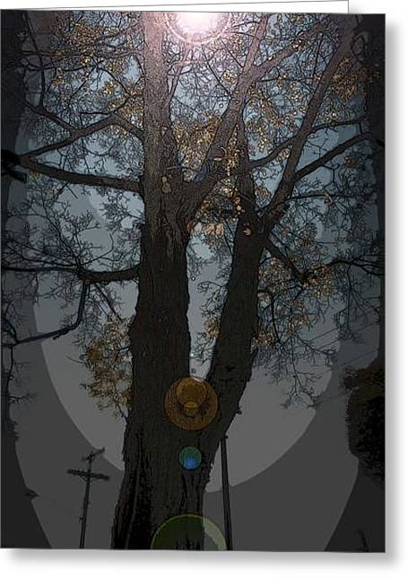 Magic Trees Greeting Card by Scott Ware