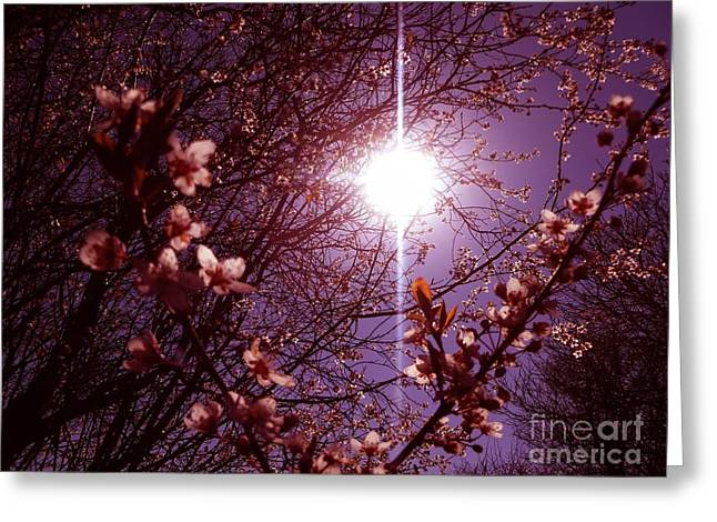 Magical Blossoms Greeting Card by Vicki Spindler