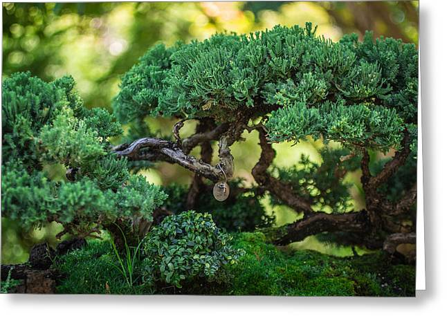 Greeting Card featuring the photograph Magical Bonsai by Julie Andel