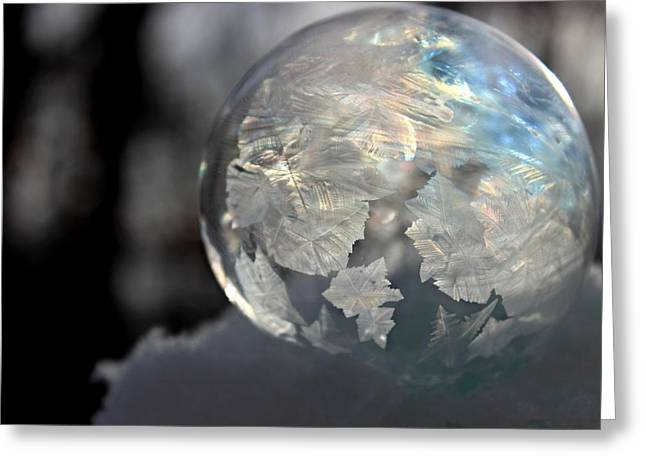 Greeting Card featuring the photograph Magical Bubble by Candice Trimble