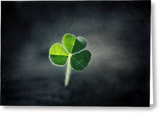 Magical Clover Greeting Card by Melanie Lankford Photography