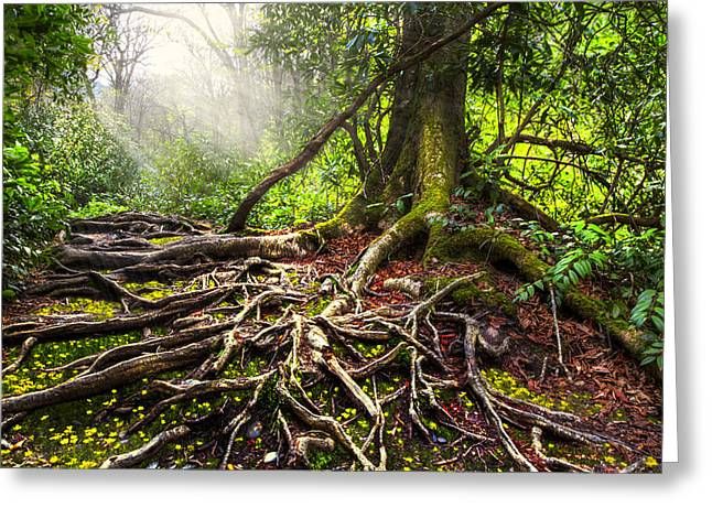 Magical Light On The Appalachian Trail Greeting Card by Debra and Dave Vanderlaan
