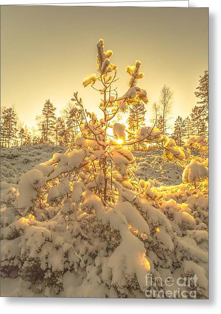 Magical Moments In The Middle Of January Greeting Card by Rose-Maries Pictures
