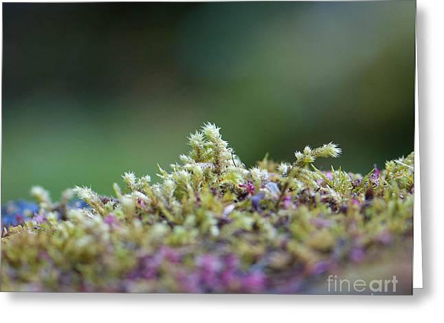 Magical Moss Greeting Card by Sarah Crites