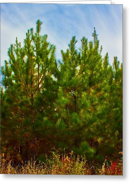 Magical Pines Greeting Card