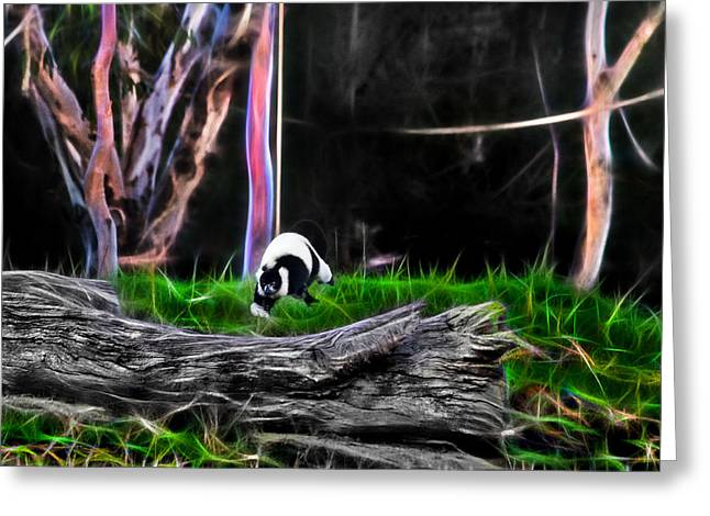 Walk In Magical Land Of The Black And White Ruffed Lemur Greeting Card