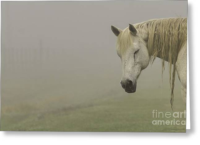Magical White Horse Greeting Card by Cindy Bryant