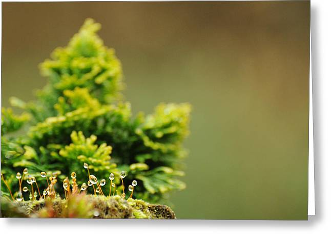 Magical World Of Green And Gold Greeting Card