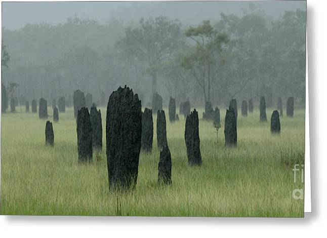 Magnetic Termite Mounds Greeting Card by Bob Christopher