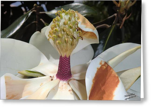 Magnolia Magnicence  Greeting Card
