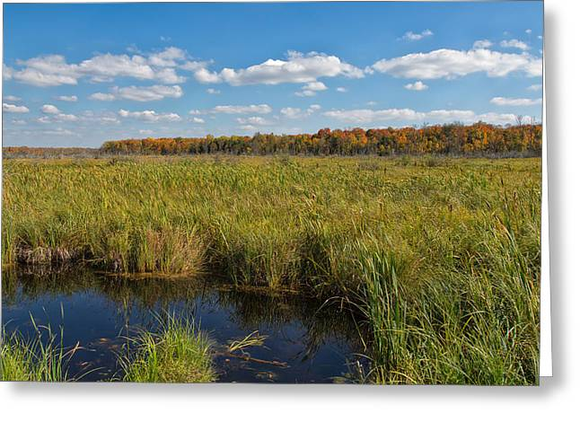 Magnificent Minnesota Marshland Greeting Card