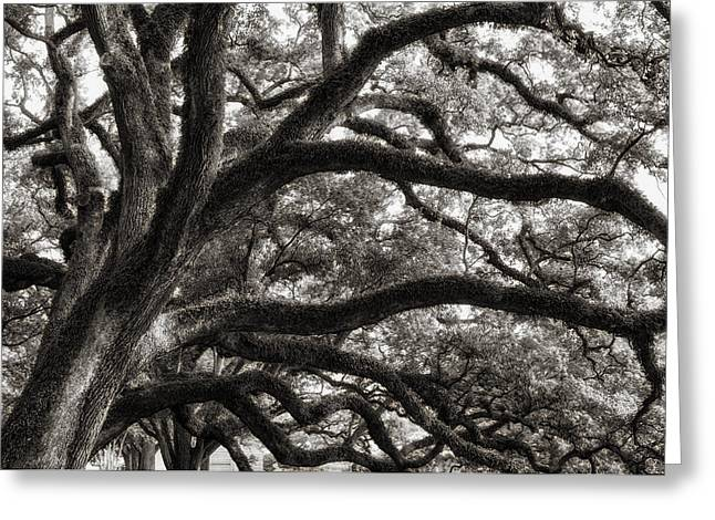 Magnificent Oaks Of Louisiana Greeting Card