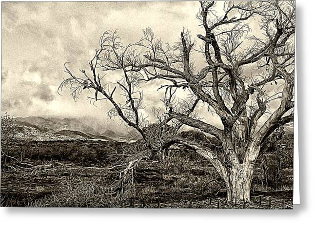 Magnificent Shoe Tree Near San Felipe Road Greeting Card by Ron Regalado