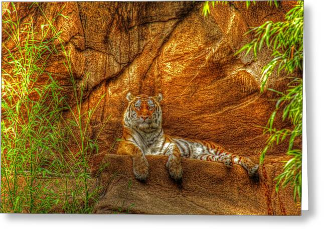 Magnificent Tiger Resting Greeting Card