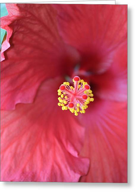 Magnolia 5  Greeting Card