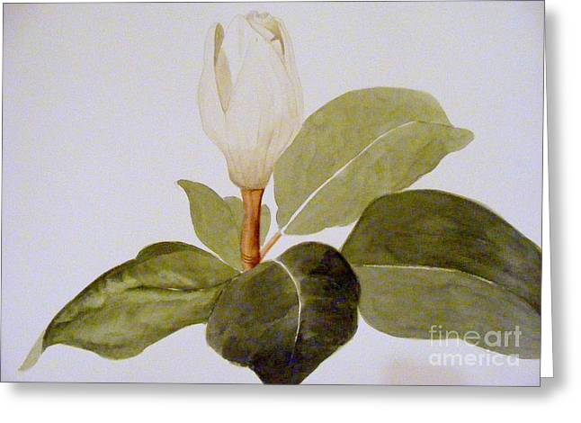 Magnolia Bud II Greeting Card by Nancy Kane Chapman