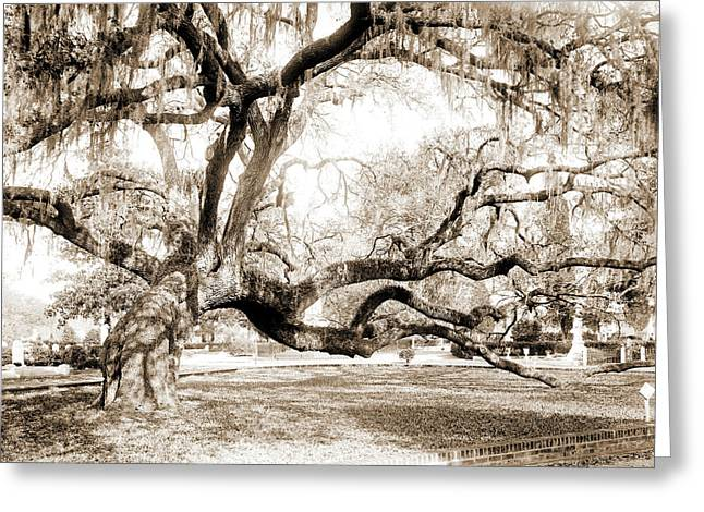 Magnolia Cemetery, Live Oaks, Charleston Greeting Card