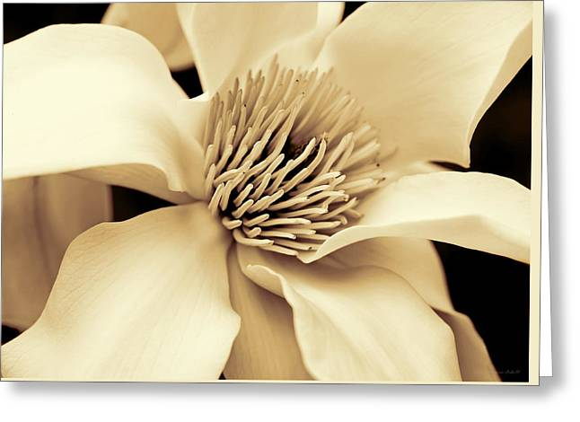 Magnolia Flower In Sepia Four Greeting Card