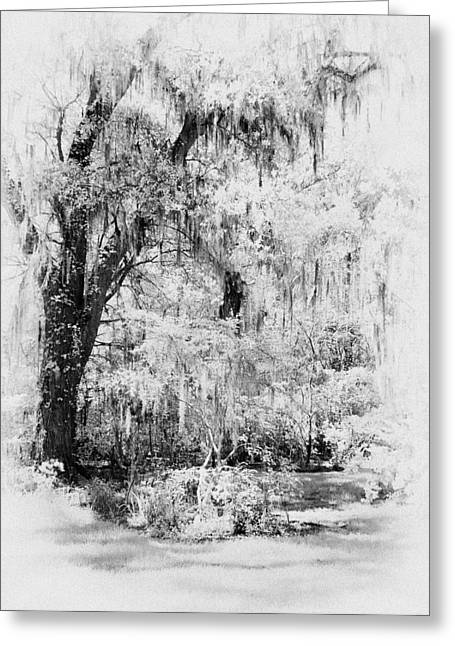 Magnolia Garden Path Greeting Card