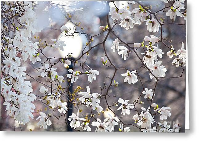 Magnolia Impression 2 Greeting Card by Susan Cole Kelly Impressions