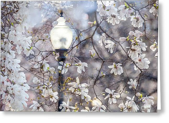 Magnolia Impression Blend Greeting Card by Susan Cole Kelly Impressions