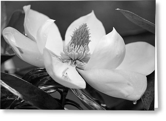 Magnolia In May - Black And White Greeting Card