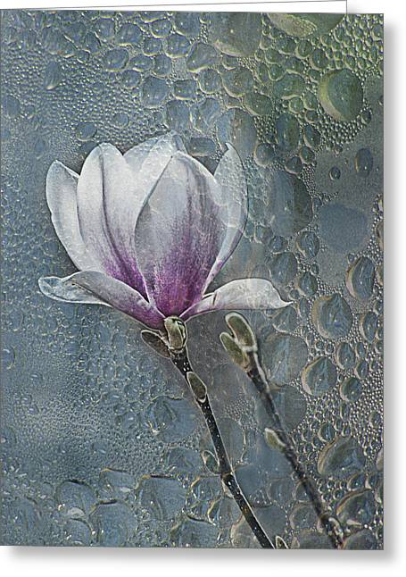 Magnolia Greeting Card by Joachim G Pinkawa