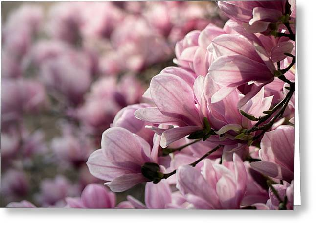 Magnolia Layers 2 Greeting Card